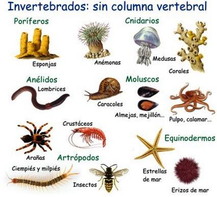 Animales invertebrados ejemplos