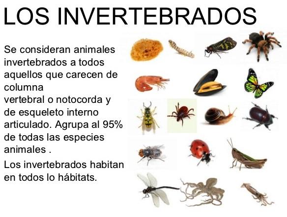 Cuáles son los animales invertebrados