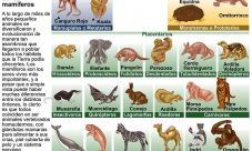 Cuáles son los animales mamíferos
