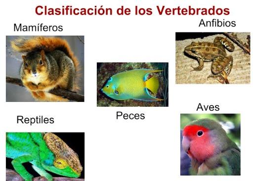 Cuáles son los animales vertebrados