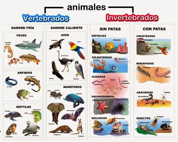 Clasificaci n de los animales reino animal - Como se aparean los elefantes ...