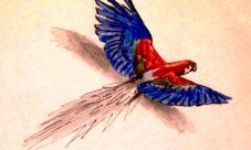 Dibujos de loros volando