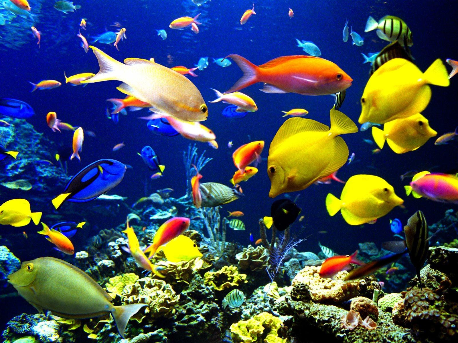 Dibujos de peces en el mar - Reino animal