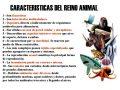 Características del Reino Animal