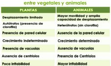 Diferencias entre el reino animal y el reino vegetal