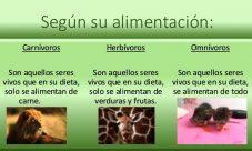 Cómo se alimenta el reino animal