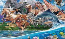 Cuál es la importancia del reino animal