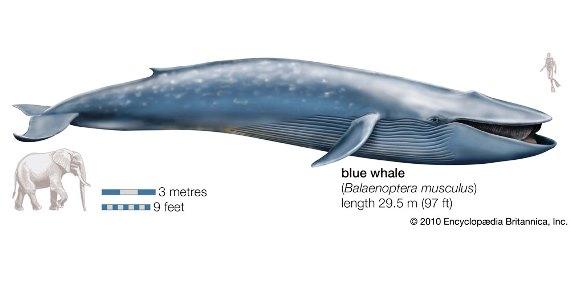 ¿Cuál es el animal más grande del mundo?