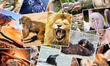 ¿Cómo se mueve el reino animal?