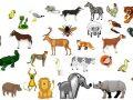 25 ejemplos del reino animal