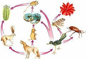 Importancia alimenticia del reino animal