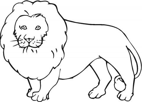 Dibujos de león para colorear