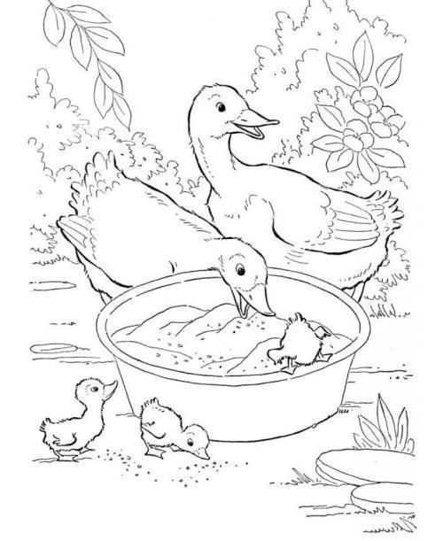 Dibujos de patos para colorear