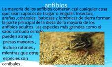¿Cómo es la alimentación de los animales anfibios?