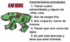 Animales anfibios, explicación para niños