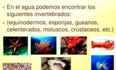 ¿Cuáles son los animales invertebrados acuáticos?