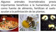 Animales invertebrados beneficiosos para el hombre