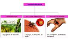 Animales invertebrados que causan enfermedades al ser humano