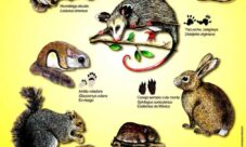 Nombres de animales mamíferos de México