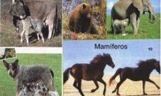 ¿Cuáles son los animales mamíferos vertebrados?