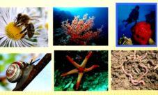 ¿Donde viven los animales invertebrados?