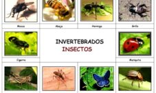 Imágenes de animales invertebrados