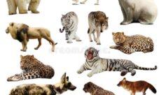 Lista con ejemplos de animales mamíferos