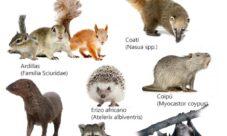 Imágenes de animales mamíferos