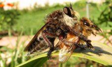 ¿Cómo se reproducen las abejas?