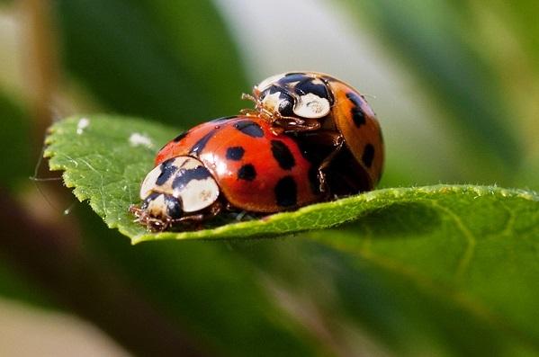 ¿Cómo se reproducen los insectos?