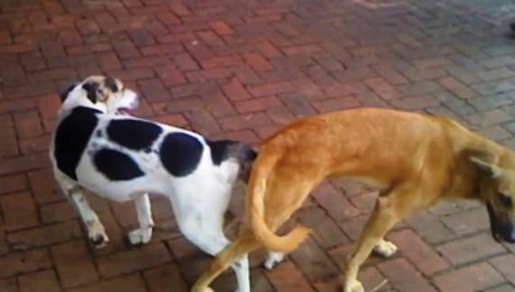 ¿Cómo se reproducen los perros?