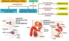 Fisiología de la reproducción animal