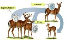 Reproducción sexual animal