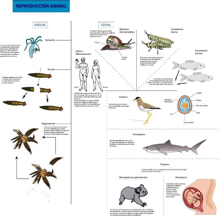 Tipos de reproducción animal
